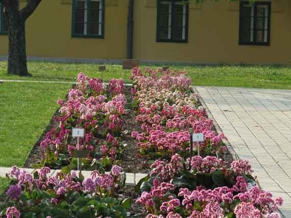 Beliebt Bevorzugt Stauden und Sommerblumen, HBLFA Gartenbau Schönbrunn #JQ_19